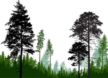 木を見て森を見を見ず